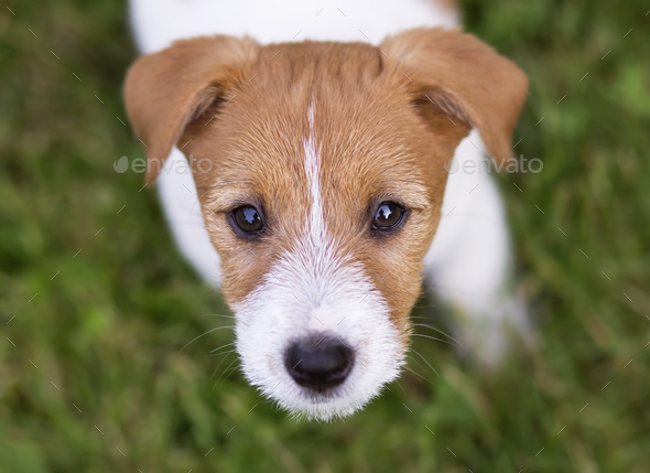 Funny dog puppy head - Stock Photo - Images