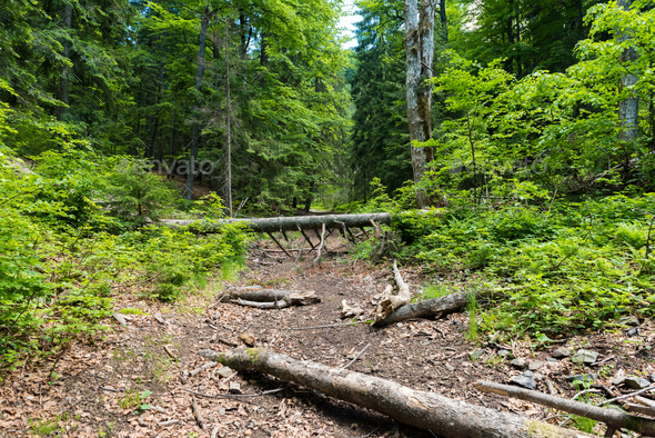 Fallen tree in the forest - Stock Photo - Images