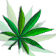 Marijuana Backgrounds Pack - GraphicRiver Item for Sale
