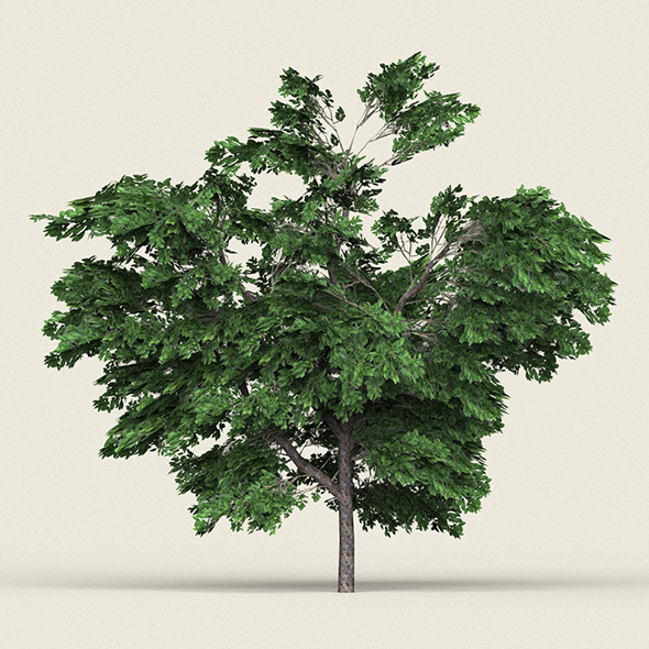 Game Ready Forest Tree 01 - 3DOcean Item for Sale