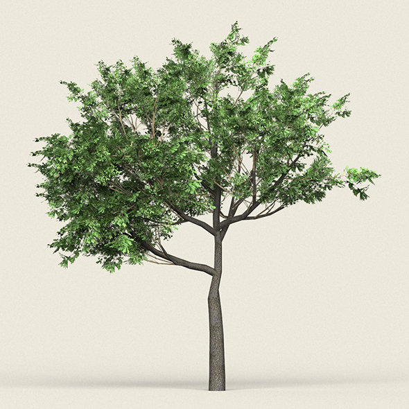 Game Ready Forest Tree 02 - 3DOcean Item for Sale