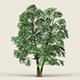 Game Ready Forest Tree 07 - 3DOcean Item for Sale