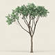 Game Ready Forest Tree 10 - 3DOcean Item for Sale
