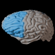 Brain Lobes Overview - VideoHive Item for Sale