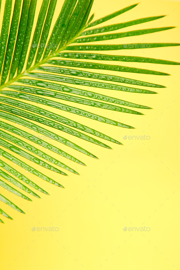 Palm leaf on yellow paper background - Stock Photo - Images