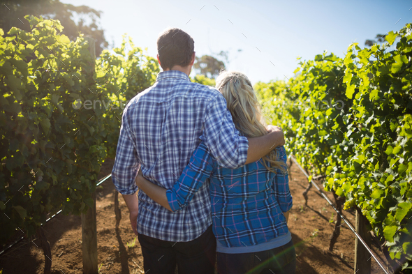 Rear view of couple embracing at vineyard during sunny day - Stock Photo - Images