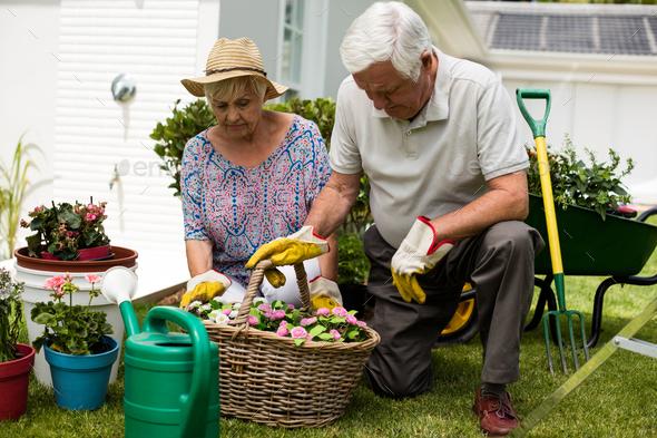 Senior couple gardening together - Stock Photo - Images