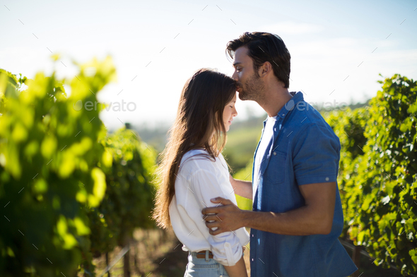 Side view of man kissing girlfriend forehead at vineyard - Stock Photo - Images