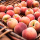 Close up view of basket with fresh juicy peaches - PhotoDune Item for Sale