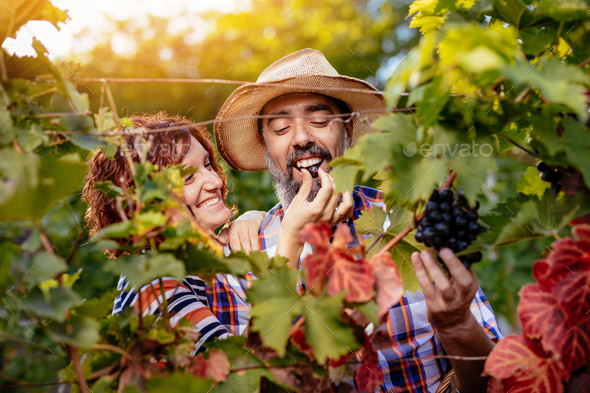 Vineyard Tasting - Stock Photo - Images