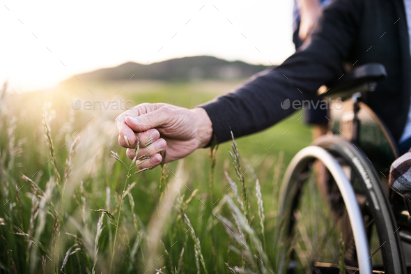 A hand of a senior man in wheelchair holding grass flower in nature. Close up. - Stock Photo - Images