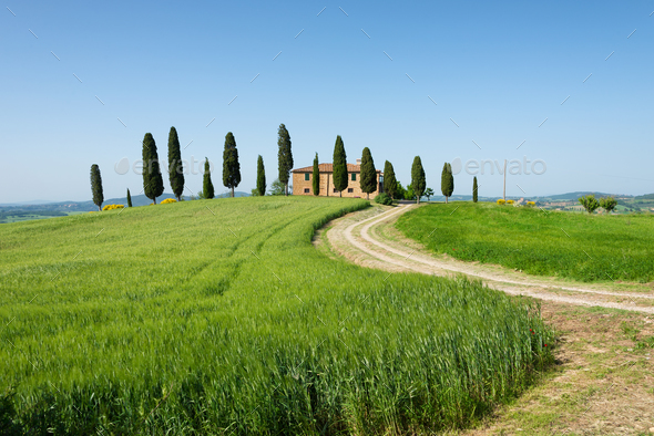 Farm villa with cypresses and crops in Tuscany - Stock Photo - Images