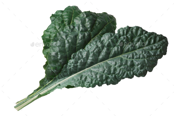 Curly leaf cabbage kale Tuscan - Stock Photo - Images