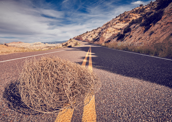 Tumbleweed on a road. - Stock Photo - Images