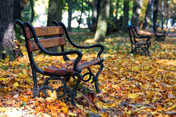 Wooden bench  - Stock Photo - Images