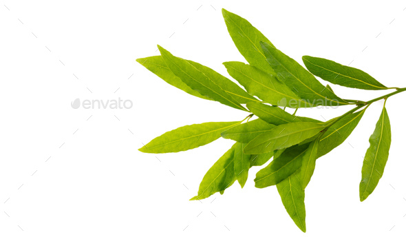 Bay leaves with copy space isolated on white background - Stock Photo - Images
