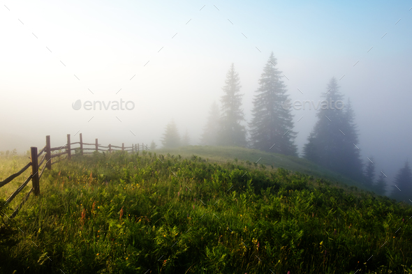 Woden fence on foggy meadow - Stock Photo - Images