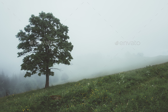 Alone tree in the fog - Stock Photo - Images