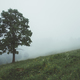 Alone tree in the fog - PhotoDune Item for Sale