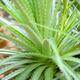 Aloe Vera, fresh leaf in natural background - PhotoDune Item for Sale