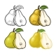 Pear Whole and Half with Leaf - GraphicRiver Item for Sale