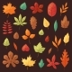 Autumn Leaf Vector  - GraphicRiver Item for Sale