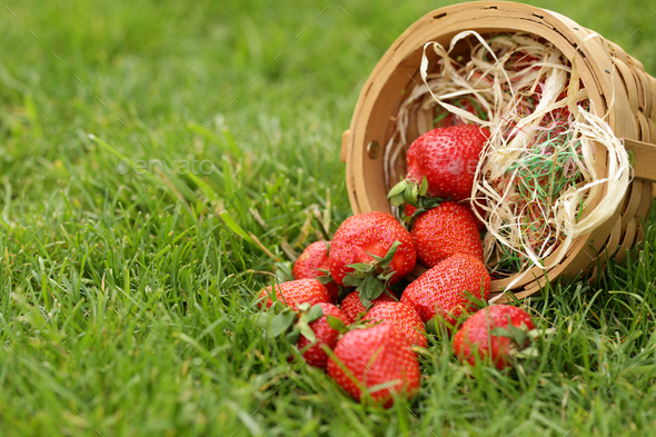 Ripe Organic Strawberry - Stock Photo - Images