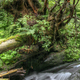 Water stream and fallen tree - PhotoDune Item for Sale