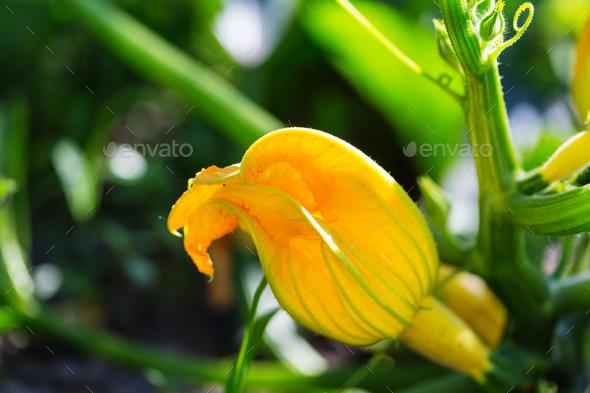 Kitchen garden - Stock Photo - Images