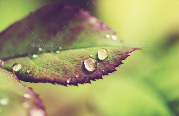 Dew drops - Stock Photo - Images