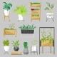 Plants in Flowerpots Vector Potted Houseplants
