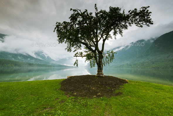 Lonely tree with lake and mountains in background - Stock Photo - Images