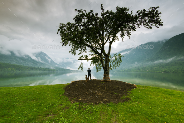 Man with dog watching sunset under lonely tree in Slovenia - Stock Photo - Images