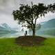 Man with dog watching sunset under lonely tree in Slovenia - PhotoDune Item for Sale