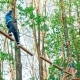 Boy on Rope Way in Forest - VideoHive Item for Sale