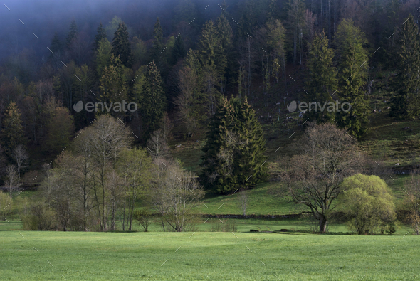 Misty landscape near Menzenschwand - Stock Photo - Images