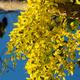 Golden shower - PhotoDune Item for Sale