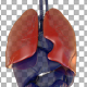 Human Anatomy Lungs - VideoHive Item for Sale