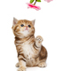 Small  kitten and decorative flower - PhotoDune Item for Sale