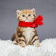 Little  kitten  in a red scarf - PhotoDune Item for Sale