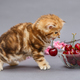 Kitten and a bowl with cherry - PhotoDune Item for Sale