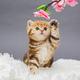 Little red kitten  and flower - PhotoDune Item for Sale
