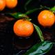 Tangerines background. Delicious and beautiful Citrus. - PhotoDune Item for Sale