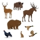 Wild Forest Animals - GraphicRiver Item for Sale
