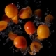 Apricots Flies To the Camera on a Black Background - VideoHive Item for Sale