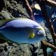 fish is swimming in marine aquarium - PhotoDune Item for Sale