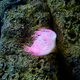 pink sea anemone - PhotoDune Item for Sale