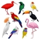 Detailed Vector Set of Various Exotic Birds