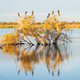 A Darter, Cormorants and Ducks - PhotoDune Item for Sale