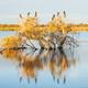 A Darter, Cormorants and Ducks - PhotoDune Item for Sale